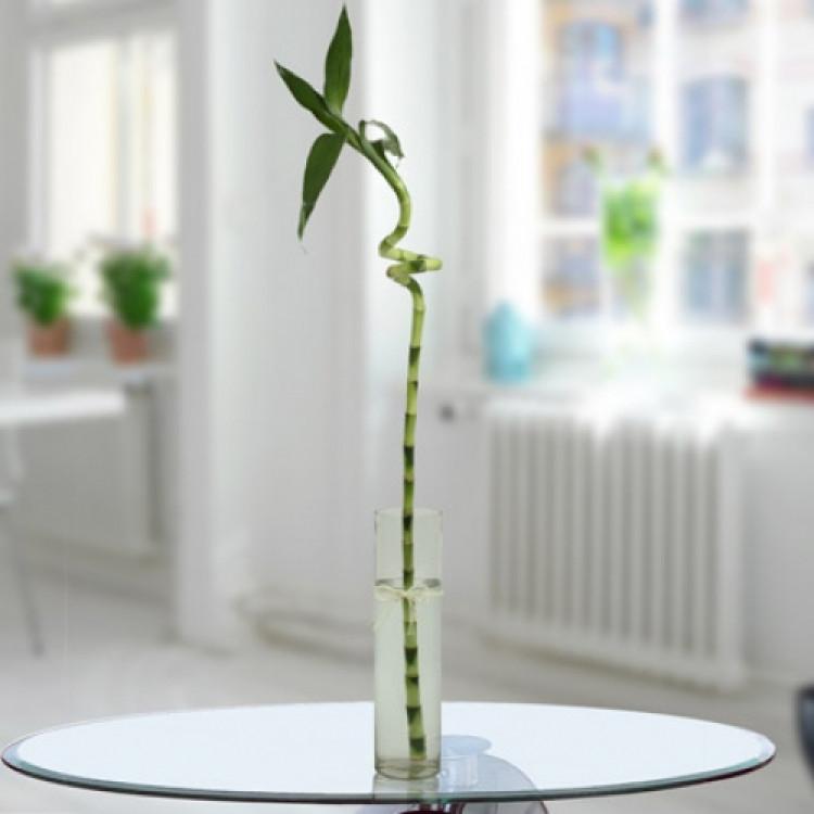 1 Spiral Bamboo Stick